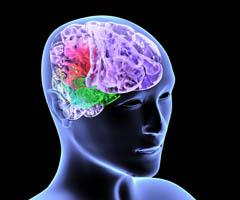 Мозг горожан хуже переносит стресс