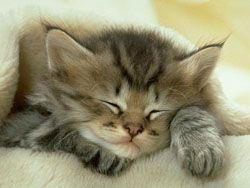 Домашние животные снимают стресс