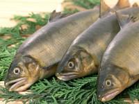Морская рыба и банан помогут при усталости
