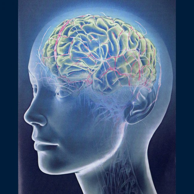 Всего один участок мозга делает воображаемое реальным