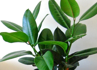 Зеленые растения для душевной атмосферы