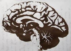 25 удивительных фактов о Вашем мозге