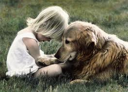 Польза собак для здоровья человека