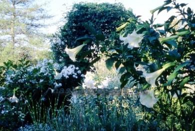 Украшение сада — не менее важно, чем экстерьер самой дачи