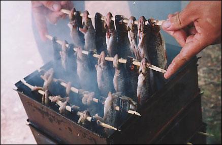 Бизнес идея: копчение рыбы