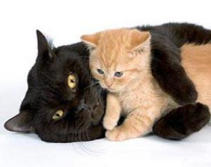 Кошки опасны для психического здоровья людей