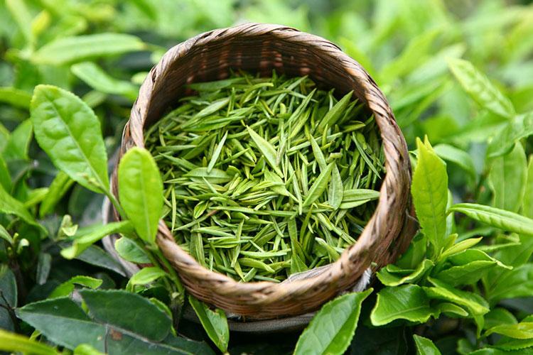 Полезная привычка: мой друг зеленый чай