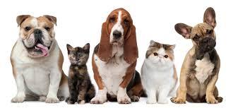 Домашние животные и наше здоровье.