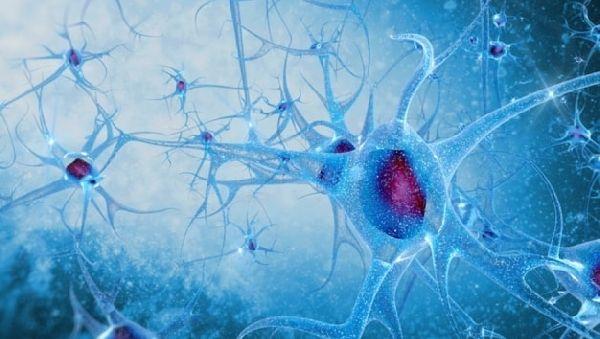 Аутизм и шизофрению «запускает» один и тот же ген