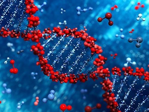 Обнаружен ген, связанный с развитием шизофрении