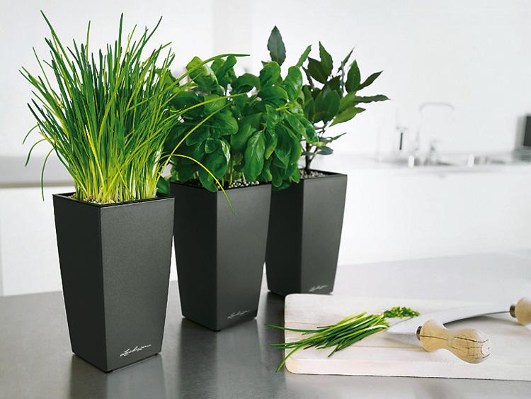 Дополняем интерьер растениями.