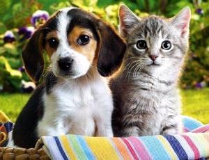 Психологи: собаки помогают справиться с тревогой