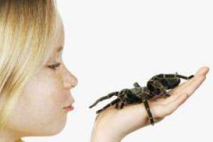 Боязнь пауков – следствие воспитания
