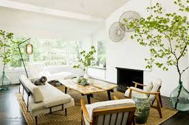 Комнатные растения в дизайне помещения