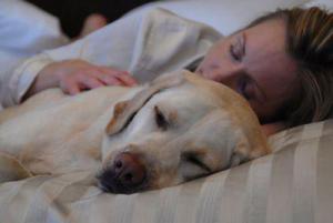 Хотите обрести душевный покой — спите в постели с собакой