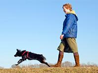 Собаки заменяют целую гору лекарств, спортзал и походы к психологу