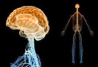 Как организм «кричит» вам о сбоях в нервной системе