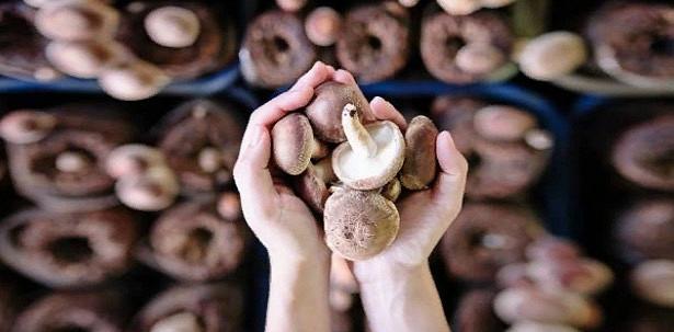 Психоактивное вещество грибов поможет в лечении тяжелой депрессии
