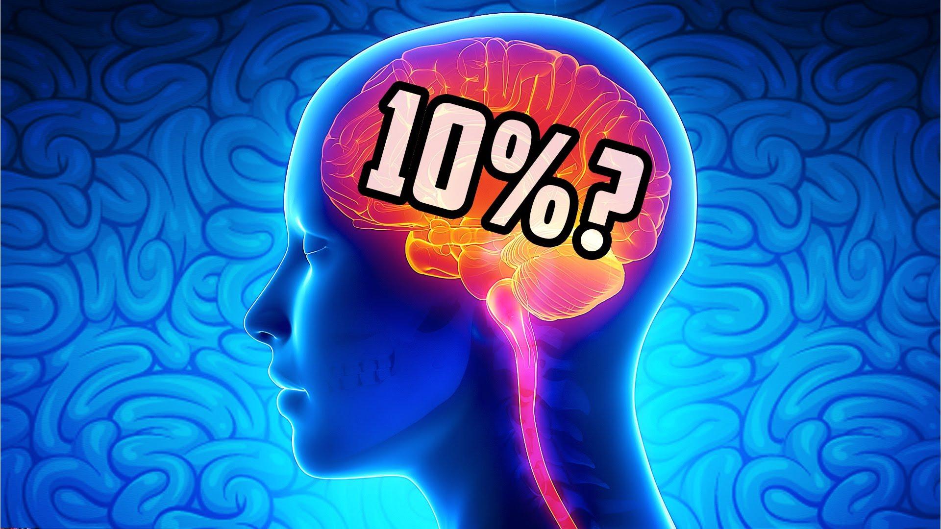 Разоблачены мифы о работе мозга