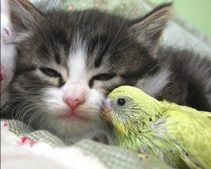 Домашние животные приносят пользу нашему психическому здоровью