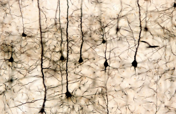 Учёные изобрели способ восстановления нервных клеток