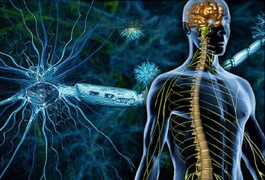 Нарушение нервной системы: рассеянный склероз