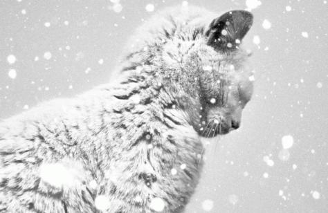Зимняя хандра: как не впасть в депрессию
