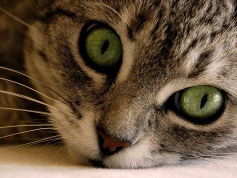 После кошачьих царапин у подростка развились симптомы тяжелой шизофрении