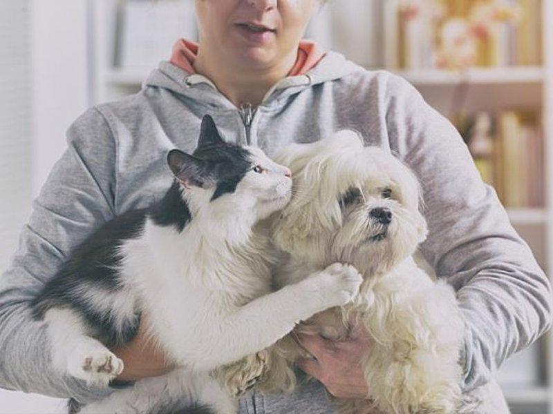 Владельцы собак в два раза счастливее кошатников