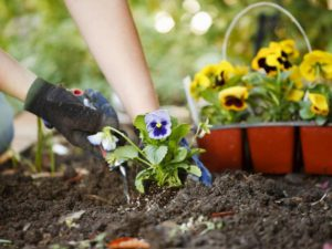 Работа в огороде и в саду улучшает психическое здоровье