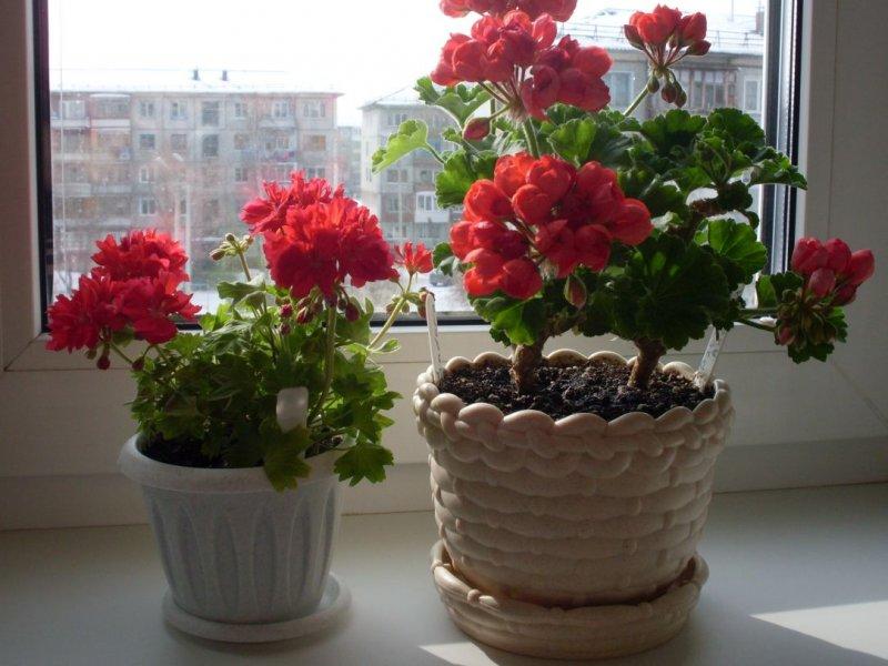Домашние растения, которые благоприятно действуют на нервную систему