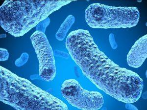 Бактерии в кишечнике могут вызывать гипертонию с депрессией