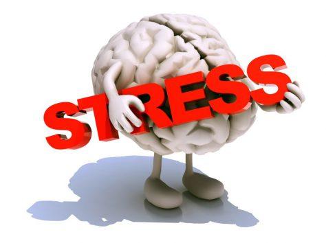 Как стрессы влияют на мозг?
