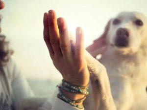Собаки помогают защитить хозяев от преждевременной смерти