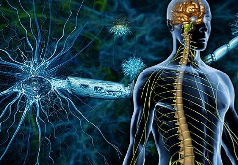 Как устроена наши нервы