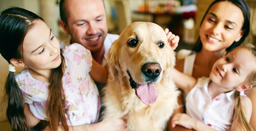 Психологи: когда есть проблемы со здоровьем, необходимо завести собаку