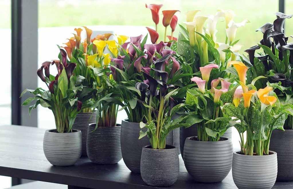 Растения для избавления от стресса