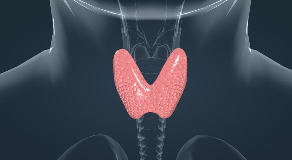 Анализ на гормоны. Забота о щитовидной железе