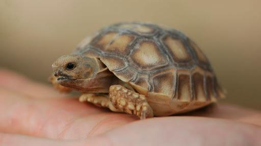 Черепаха, стоит ли заводить?