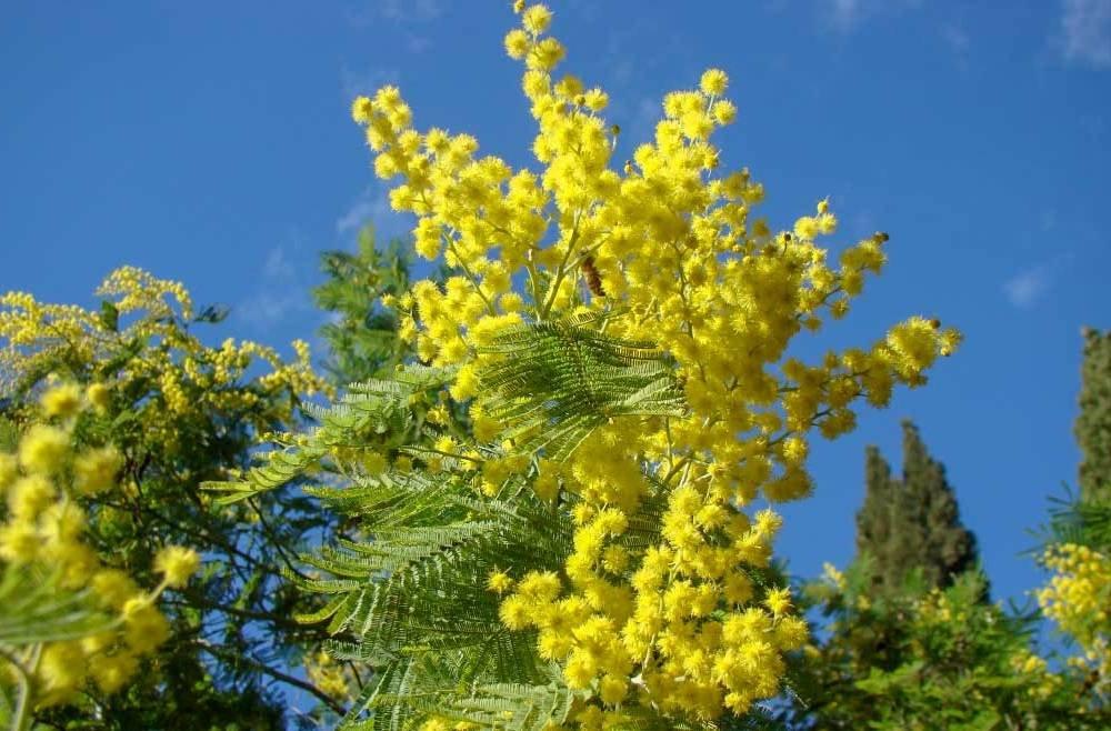 Названы растения, помогающие справиться со скорбью
