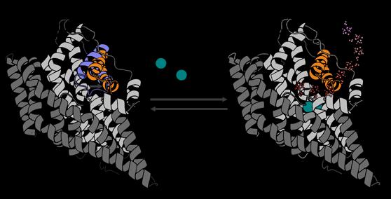 Как происходит переноса глутамата в нервной системе?