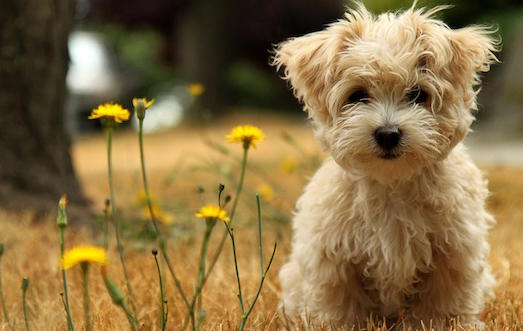 Как перебороть страх перед собаками?