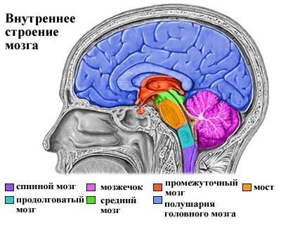 Эпилепсия: причины, симптомы